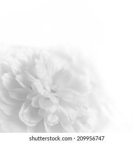 white flowers background 画像 写真素材 ベクター画像 shutterstock