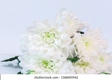 White flowers on a white background, a bouquet of white chrysanthemums; beautiful flowers; beautiful bouquet; Bouquet;  background, chrysanthemums on a white background; composition.