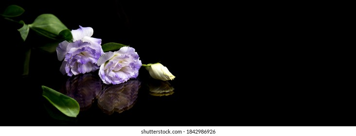 White flowers on black background, reflection. The concept of mourning and sorrow.Copy space for text. Selective focus
