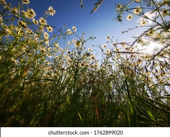 White flowers on field with blue sky