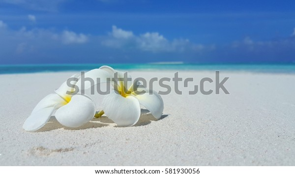 White flowers on the white sandy beach with blue sea and sky background summer