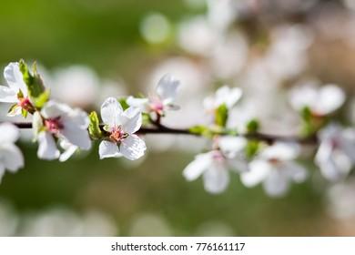 White Flowers on Stalks