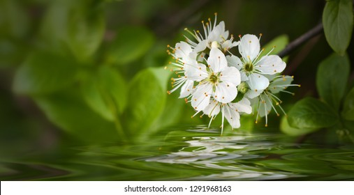 white flowers on the water