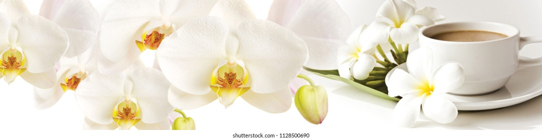 White flowers orchids and a cup of tea. Panorama for glass panels. High quality image for skinali. Panoramic view