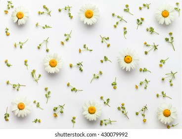 white flowers pattern on white background. Flat lay.