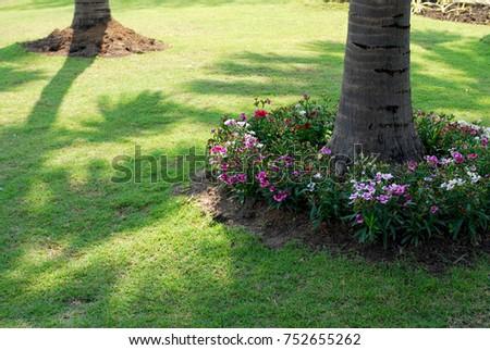 White Flowers Purple Flowers Around Coconut Stock Photo Edit Now