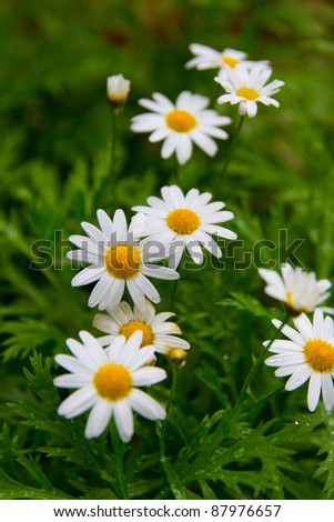 White Flowers Round Yellow Center Stock Photo Edit Now 87976657