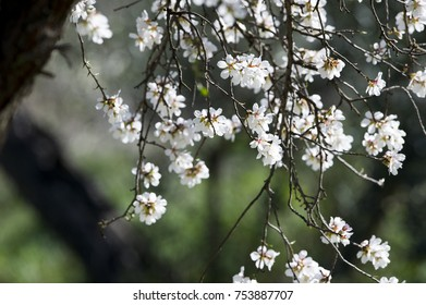 White flowers tree