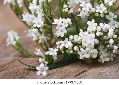 white flowers Valeriana officinalis macro on the table. horizontal