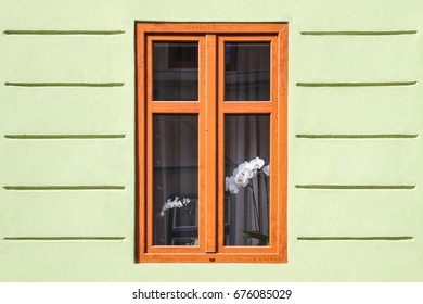white flowers in the window