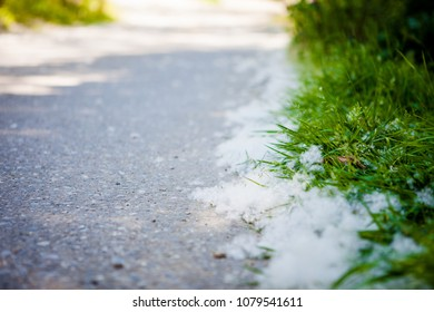 White fluff lies on the edge of the road on the green grass. concept poplar allergy.