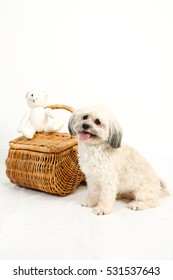 White fluffy dog sits beside a wicker basket for a studio portrait on white background