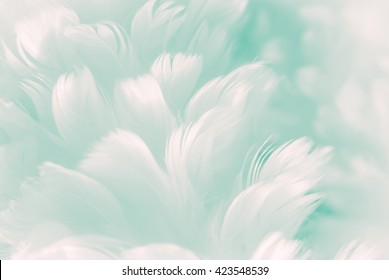 White fluffy feather closeup - pale Tiffany blue to robin egg greenish color background - and new coming Jade Evanescence color of Fashion Color Trends - Spring Summer 2017