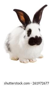 White fluffy rabbit isolated on white background
