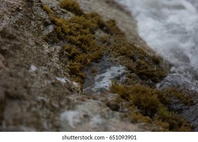 white foam surge over dark detailed rocks