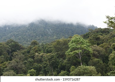 White fog around mountain behind green woods dense in rainforest, misty and wild valley at Malaysia, tropical landscape in Asia country.