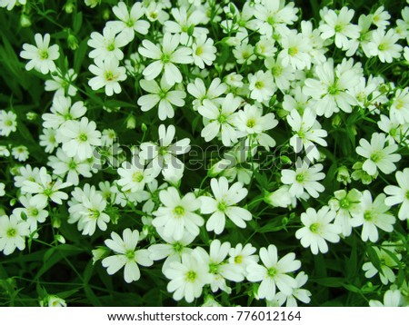 White Forest Flowers Blooming Spring Abstract Stock Photo Edit Now