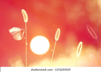 White fragile butterfly on a grass at sunset. Summer natural image.