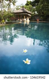 white frangipani flowers floating on the surface of resort spa pool in ubud bali indonesia