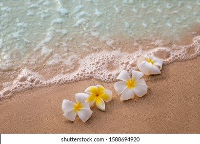White frangipani plumeria flowers on sand at the beach front of the ocean waves background. Beautiful landscape scene for relaxation and advertising. Selective focus.