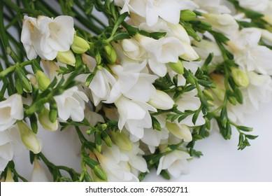 Freesia images stock photos vectors shutterstock white freesia flower bouquet mightylinksfo