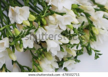 White Freesia Flower Bouquet Stock Photo Edit Now 678502711
