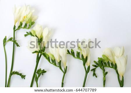 White freesia flower green buds stock photo edit now 644707789 white freesia flower green buds mightylinksfo