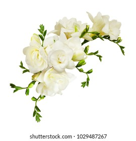 White freesia flowers in a beautiful composition isolated on white background