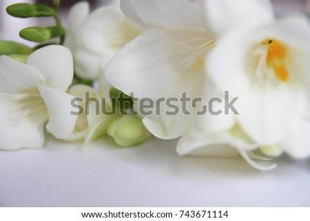 White Freesia Flowers Bouquet Stock Photo Edit Now 743671114