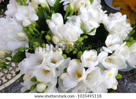 White freesias fragrant spring flowers bouquet stock photo edit now white freesias fragrant spring flowers bouquet mightylinksfo