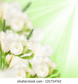White fressia with green leaves