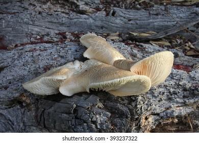 White fungus on tree bark