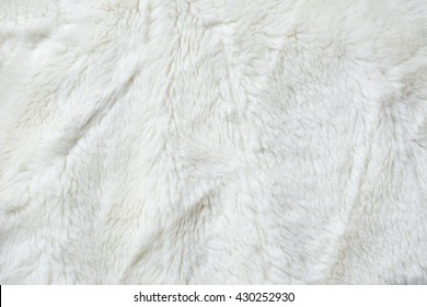 White fur close up background