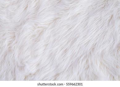 White Fur Texture Background fb59e2cbe