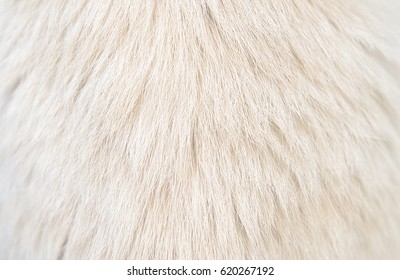 white fur texture from cat, texture background, warm tone.