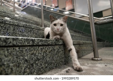 White furry cat inside istanbul metro, sitting and posing on stairs