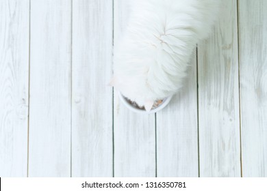 White furry persian cat with flat face eats dry cats food from round bowl on wooden floor.