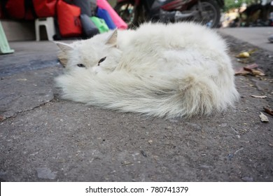 A white furry Persian cat is happily taking a rest on a street.