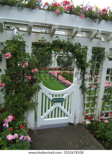 White garden gate under a rose roof arbor/trellis, entrance to garden.