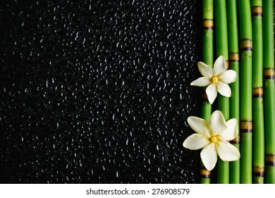 White gardenia with bamboo grove on wet background