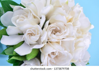 Beautiful White Gardenia On Blue Background Flower Images