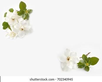 White gardenia flower bouquet isolated on white background.
