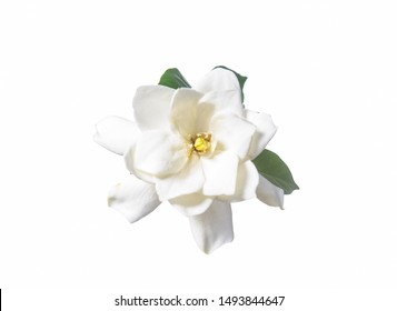 white gardenia with leaf isolated