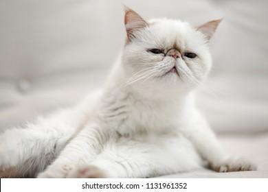 white garfield cat