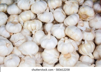 White garlic on the market. Fresh garlic harvested from the garden for sale. Vitamin healthy food spice image. Cooking ingredient picture. Pile of white garlic heads. Natural flu medicine healer
