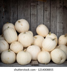 White ghost pumpkins (snowball, luminas or caspers pumkins) piled up in an aged wooden bin.