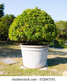 white giant flower pot with plant in park