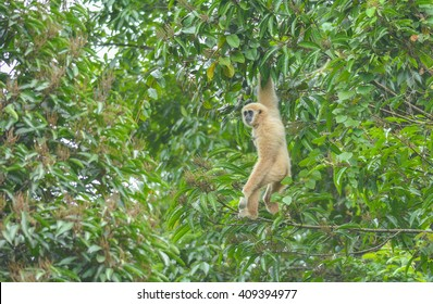 midget-hanging-on-tree-topless-girls-mom