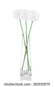 White Giganteum in vase isolated on white background