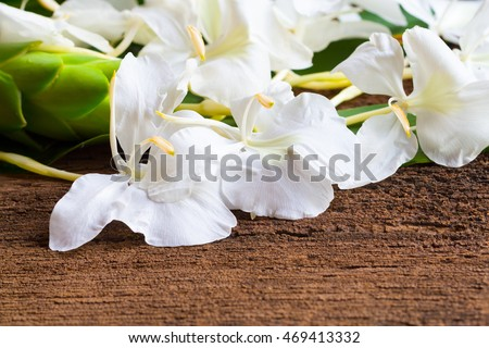 White ginger flowers called garland lily stock photo edit now white ginger flowers it also called garland lily sweet white ginger or butterfly ginger this mightylinksfo